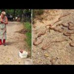Najlepsza metoda na jadowite węże to strzelba