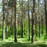 Unia Europejska chce wyrżnąć naszą branżę drzewną, a oszołomy z PiS-u ciągle chcą być w unii