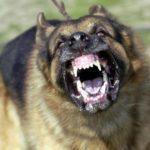 Posiadacz broni zastrzelił atakującego go psa, a dzielna policja sprawdza czy mógł się bronić posiadaną bronią…