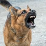 Z cyklu policja nie zapewniła bezpieczeństwa: pies dotkliwie pogryzł kobietę w Słupcy