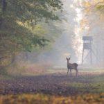 Próba uderzenia w tradycję łowiecką Wirginii Zachodniej i prawo rodziców do uczenia dzieci polowania