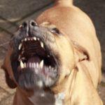 Z cyklu broń ratuje życie: groźny pies atakuje 67 letnią kobietę – pani skutecznie eliminuje zagrożenie bronią palną